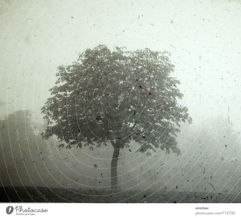 Alt wie ein Baum Nebel retro grau einzeln Außenaufnahme Schwarzweißfoto Herbst Frieden Filter dreckig alt Landschaft Morgen Einsamkeit