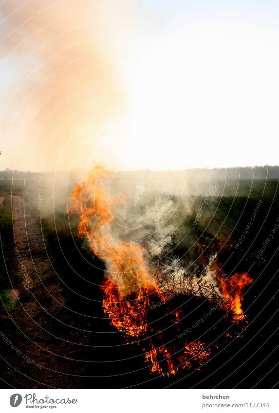 brenzlig Erde Feuer Himmel Wolkenloser Himmel Frühling Sommer Herbst Wind Sträucher Rauchen orange Kraft Vertrauen Schutz Romantik Wachsamkeit geduldig ruhig