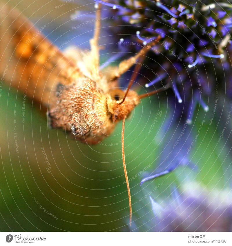 the beginning of life Motte Schmetterling Tier Pause Ernährung Nährstoffe Honig Blüte Pflanze braun Fühler Blümchensex dunkel Muster Blume grün weiß leicht