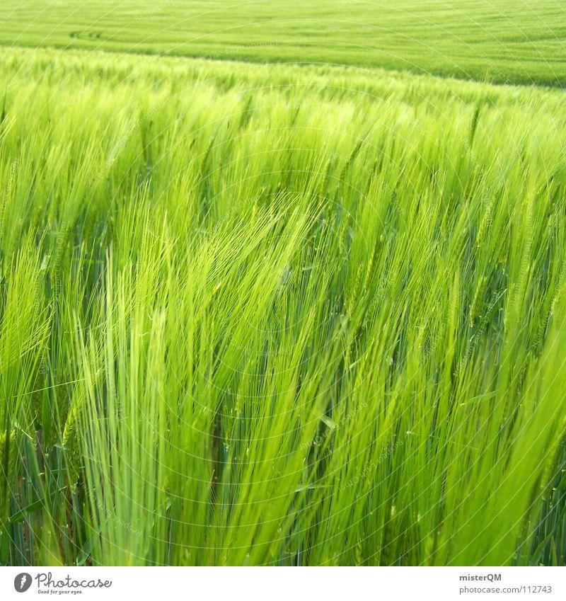 green infinity Feld grün Ferne Einsamkeit ruhig Spuren dunkel Vordergrund Hintergrundbild Zutaten unreif Deutschland Gesundheit Heimat Gelassenheit