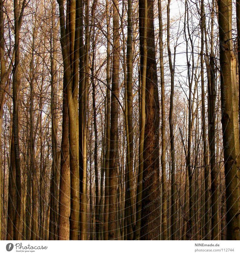 Baumgeflüster Holz Wald gruselig Herbst Winter Baumstamm braun eng Spaziergang Park kalt ruhig Weisheit Baumrinde Denken bäume wald gruseln Ast mytisch