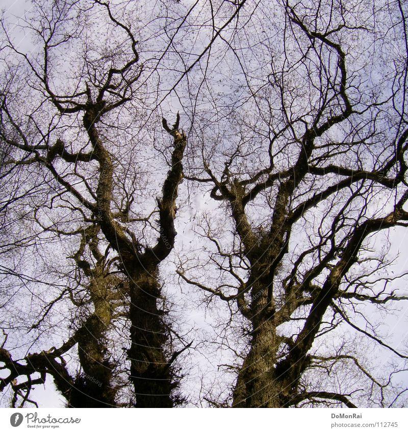 Baum (bin mal pragmatisch) Farbfoto Außenaufnahme Menschenleer Tag Silhouette Froschperspektive Luft Himmel Wald Urwald Güttingen Europa Holz Netzwerk alt