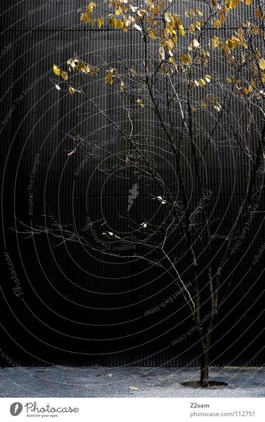 alone in the dark dunkel Einsamkeit Baum Blatt Futurismus Stil einfach Stadt Kies Licht Wand Wachstum stehen graphisch Winter Natur modern reduzieren Ast