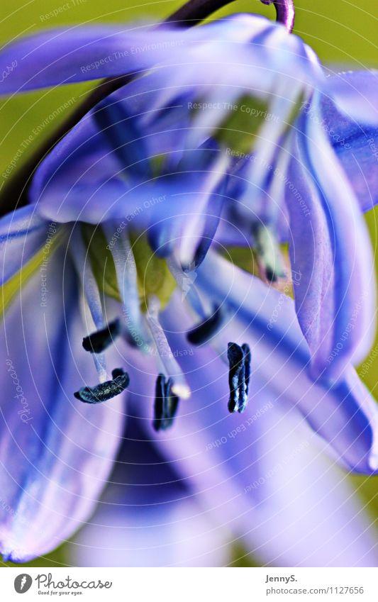Blaue Blütenpower Natur blau Pflanze schön weiß Blume Landschaft Umwelt Frühling Fröhlichkeit violett Duft Frühlingsgefühle