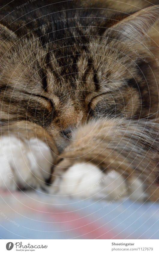 schnurr Katze Erholung Tier schlafen Haustier anstrengen Erschöpfung Trägheit