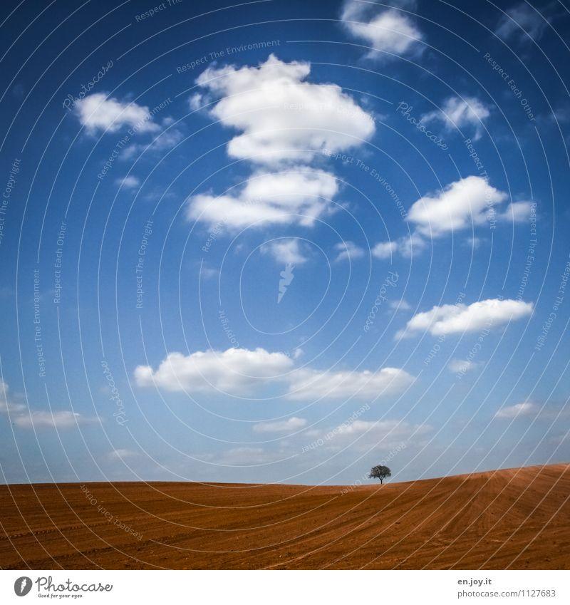 solitary Landwirtschaft Forstwirtschaft Umwelt Natur Landschaft Pflanze Himmel Wolken Horizont Sonnenlicht Frühling Klima Schönes Wetter Baum Feld Wachstum blau
