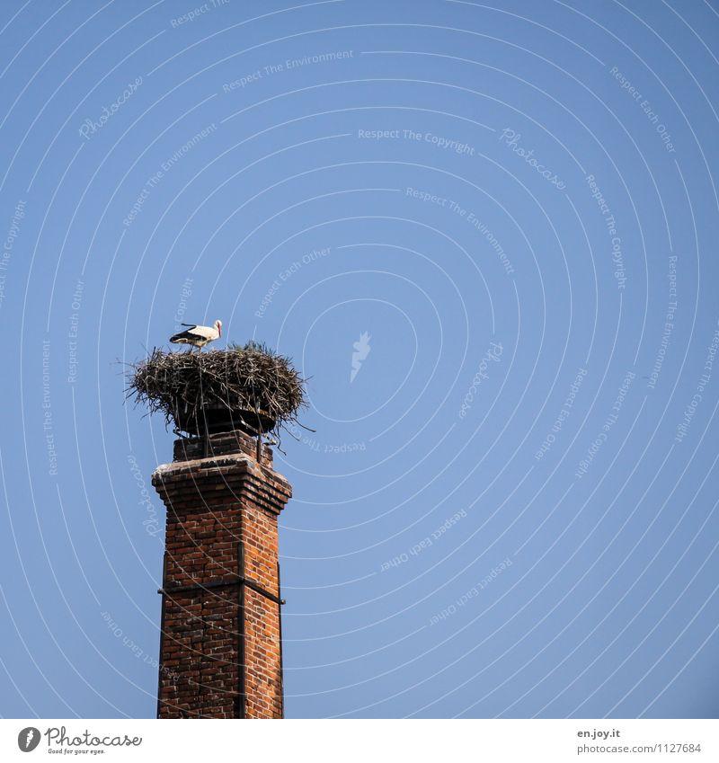 Penthaus Natur blau Sommer Tier Frühling Religion & Glaube braun Vogel oben Wachstum Idylle Wildtier hoch Lebensfreude Schönes Wetter Hoffnung