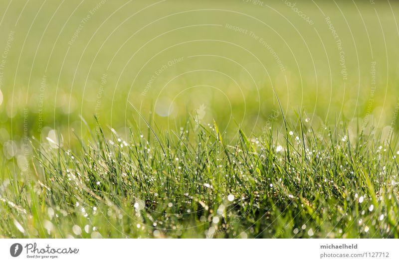 Morgentau Natur Pflanze grün Sommer Erholung Blatt Umwelt Wärme Wiese Frühling Gras natürlich Garten Park träumen Feld