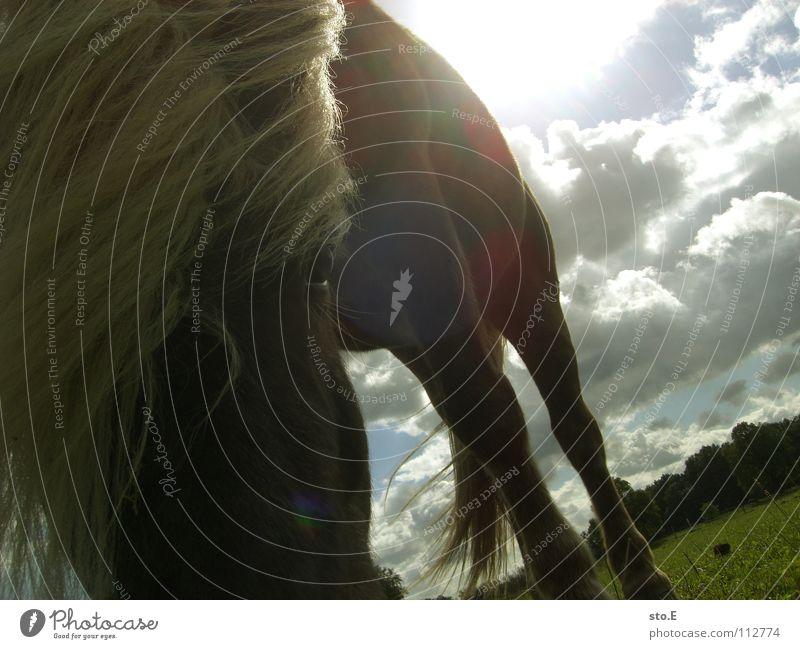 naturblond Himmel Natur grün schön Sonne Tier Wolken Wiese Ernährung Spielen Freiheit Glück Beleuchtung braun Wind Kraft