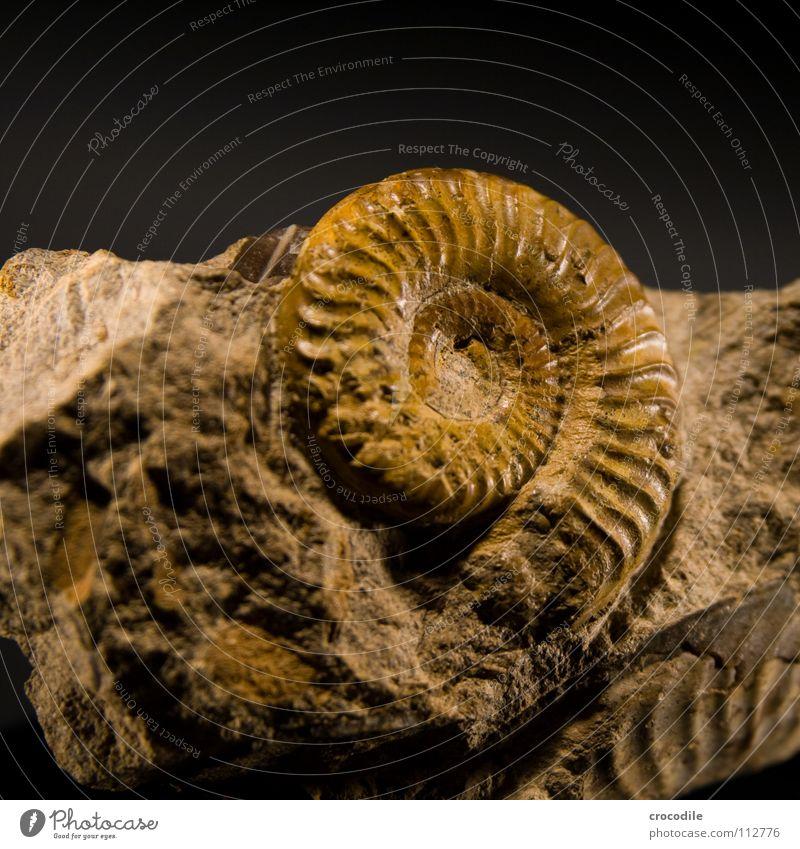 ammonit alt Tier Tod Stein Schalen & Schüsseln ausgestorben Urzeit Steinzeit Krustentier Ammoniten