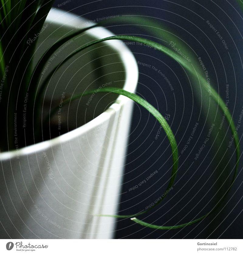 Gras II Leben ruhig Dekoration & Verzierung Zimmerpflanze Natur Pflanze Grünpflanze Topfpflanze Linie Streifen rund grün schwarz weiß Lebewesen Sauerstoff