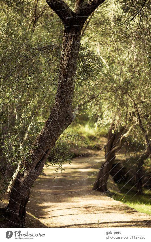 Der Weg ist das Ziel Natur Ferien & Urlaub & Reisen Pflanze grün Sommer Sonne Baum Landschaft Ferne Wald Wärme Wege & Pfade Garten Zufriedenheit Idylle