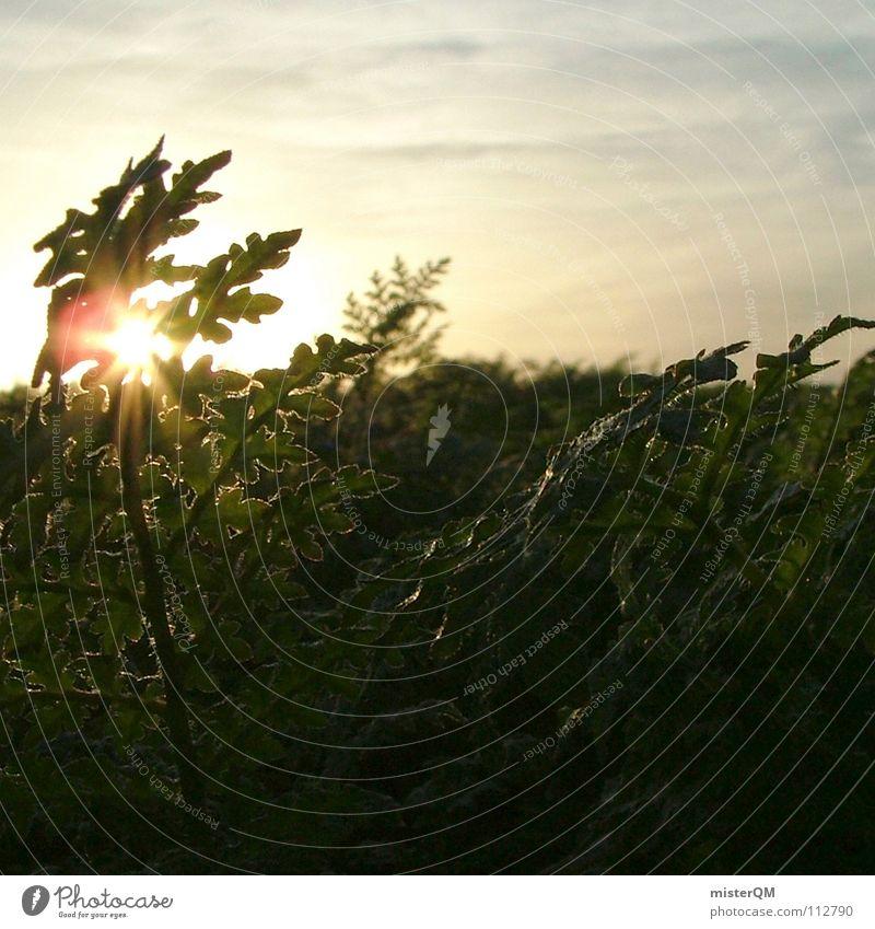 day off Freizeit & Hobby ruhig Sonnenaufgang Sonnenuntergang Licht flach Vordergrund Pflanze Blatt Hintergrundbild Wolken Himmel Geborgenheit Frieden baumeln