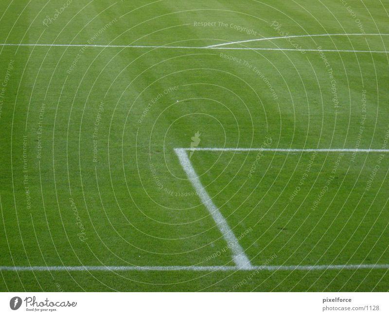 Fußballrasen Strafraum Rostock grün weiß Rasen Linie