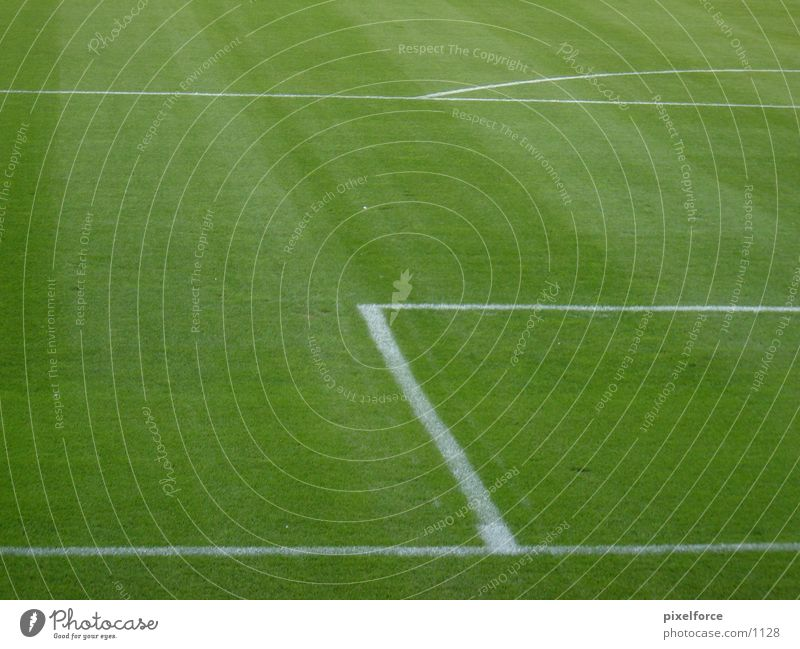 Fußballrasen weiß grün Fußballplatz Linie Rasen Rostock Strafraum