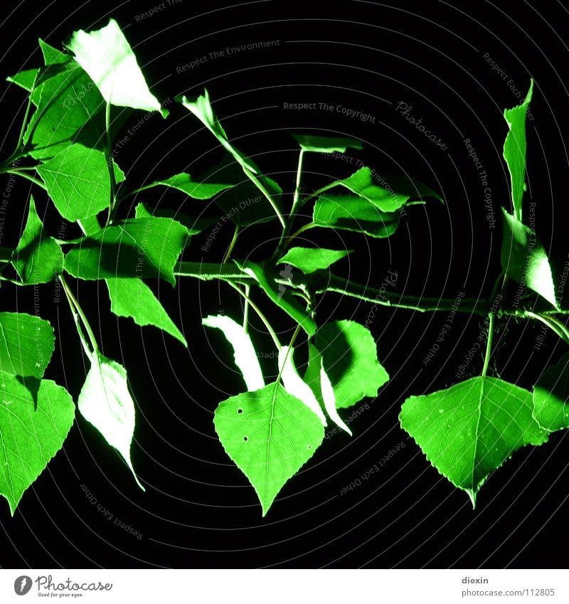 Zweig! Grün! Farbfoto Außenaufnahme Menschenleer Nacht Kunstlicht Licht Kontrast Zentralperspektive Natur Pflanze Nachthimmel Baum Sträucher Blatt Grünpflanze
