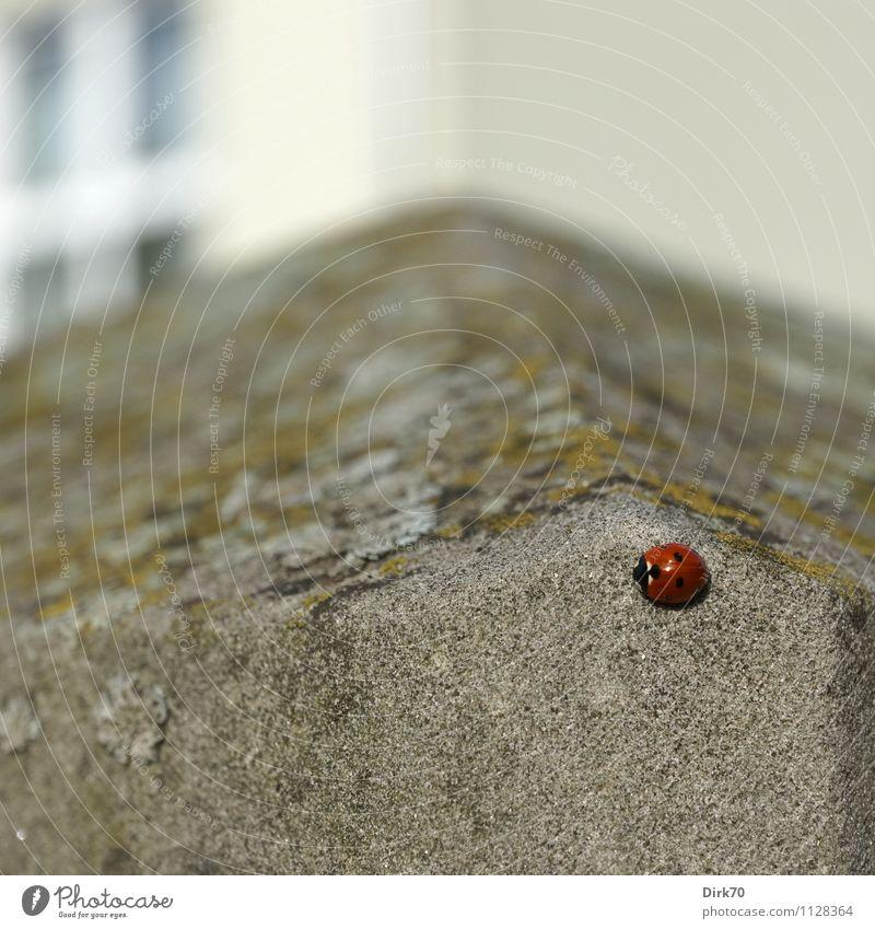 Auf der Mauer ... Häusliches Leben Haus Umwelt Tier Frühling Schönes Wetter Pflanze Flechten Garten Einfamilienhaus Wohnhaus Wand Fassade Fenster Zaun Zaunpfahl