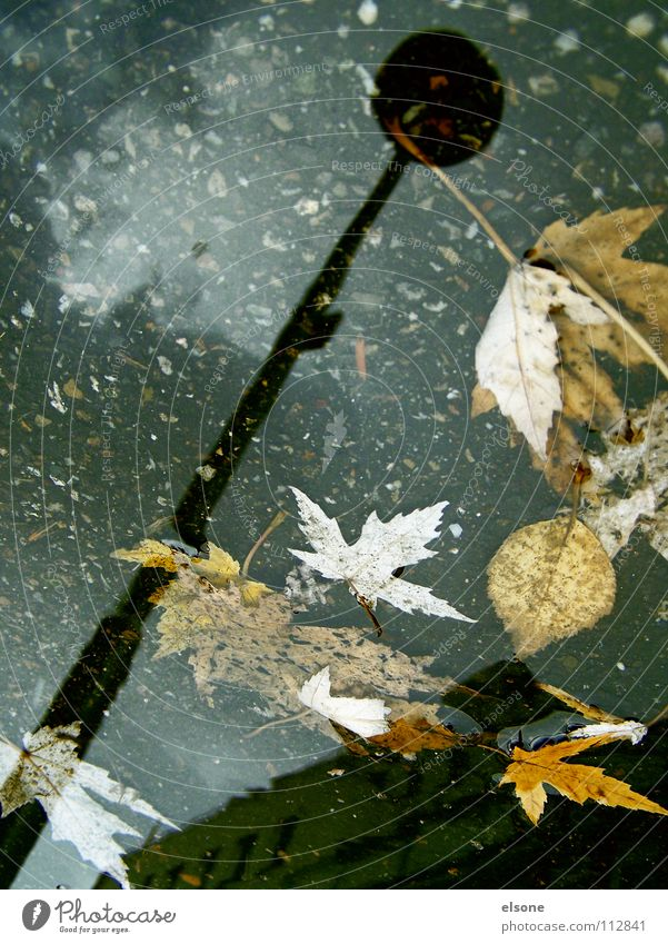 ::AQUARIUS:: Laterne Licht Blatt Winter Herbst kalt nass ungemütlich mehrfarbig Sturm Pfütze Haus Gebäude laublos Reflexion & Spiegelung Wohnung Baum Kunst