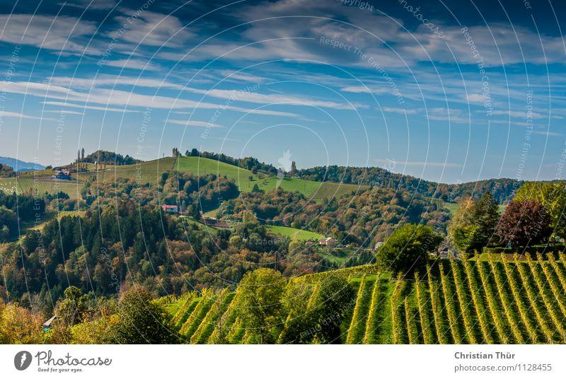 Hügeliges Panorama Himmel Natur Ferien & Urlaub & Reisen Pflanze Sommer Baum Erholung Wolken Wald Berge u. Gebirge Leben Felsen Tourismus Park Zufriedenheit