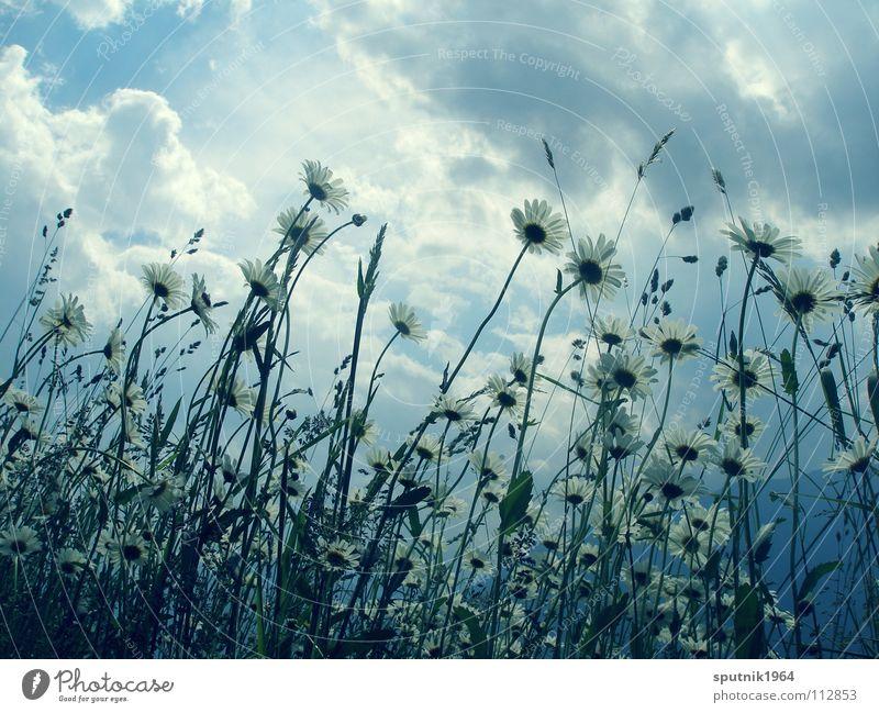 Bergsommer Himmel Blume Sommer Ferien & Urlaub & Reisen Wiese Gras Alpen Gewitter