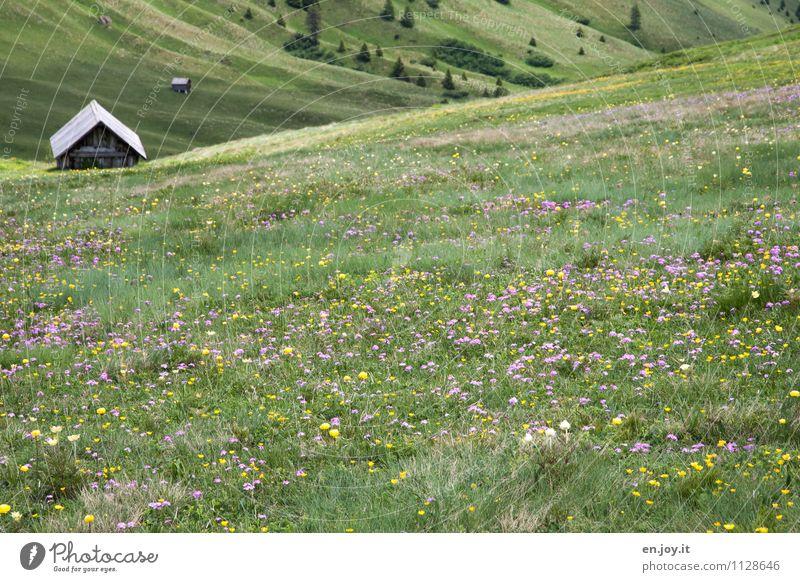 Frühlingszauber Natur Ferien & Urlaub & Reisen Pflanze grün Sommer Erholung Landschaft ruhig Berge u. Gebirge Wiese Tourismus Fröhlichkeit Blühend Romantik