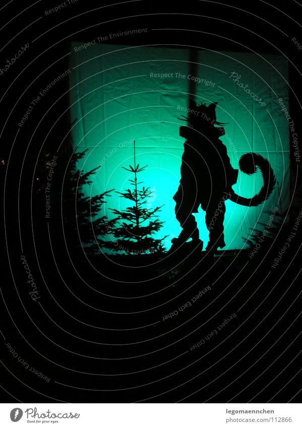 lichtspiel/ der gestiefelte Kater schön Baum grün blau Winter Tier dunkel kalt träumen Katze groß ästhetisch einfach Hose Tanne Jahreszeiten