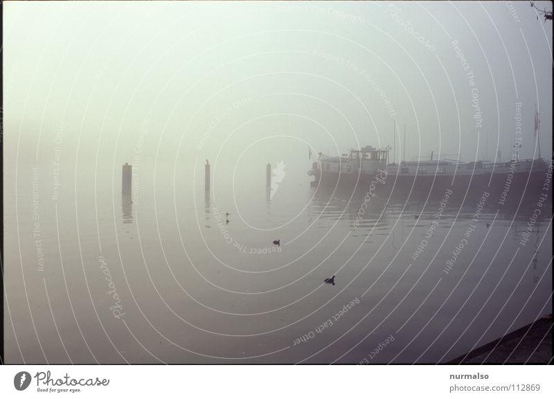 Nebel des Grauens aufsteigen Wasserfahrzeug unsichtbar weiß Wand Hand weich Watte Wasserdampf Wassertropfen Nebellandschaft Fluss Bach Herbst Seil Sonne