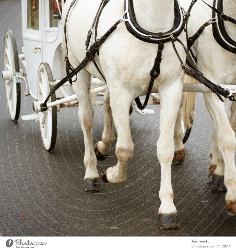 Drum prüfe wer sich ewig bindet... weiß Freude Straße Beine Verkehr Tierpaar paarweise laufen Güterverkehr & Logistik Hochzeit fahren Pferd Teamwork ziehen