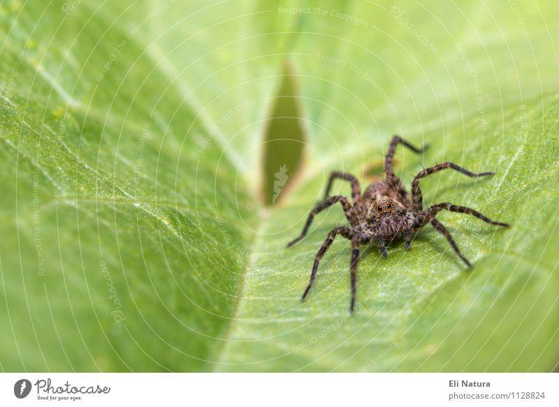 Spinne Natur Pflanze schön grün Sommer Blatt Tier gelb Wiese Frühling natürlich klein Garten braun Park Angst