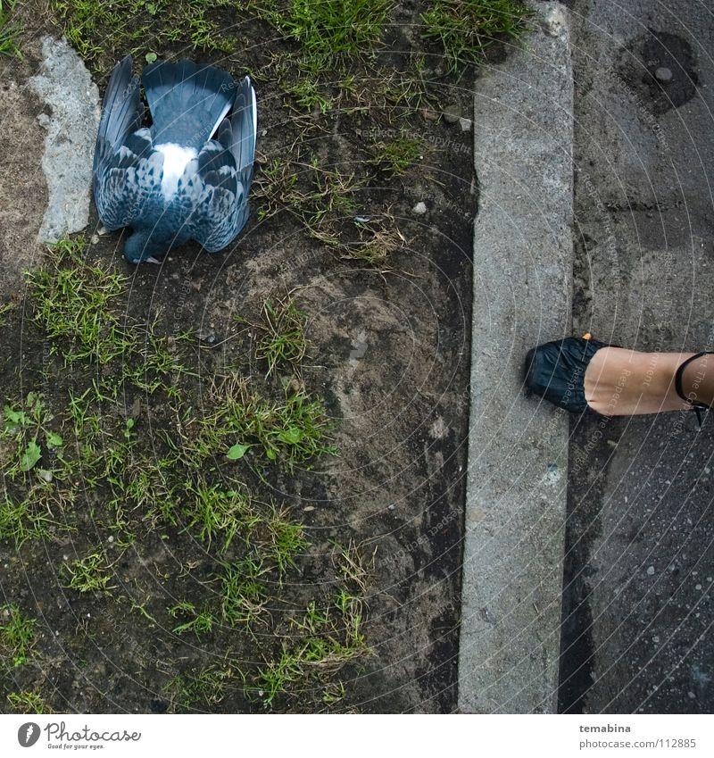 Dead Pigeon Stadt Vogel dead pigeon grass street woman's leg body part death animal bird fallen