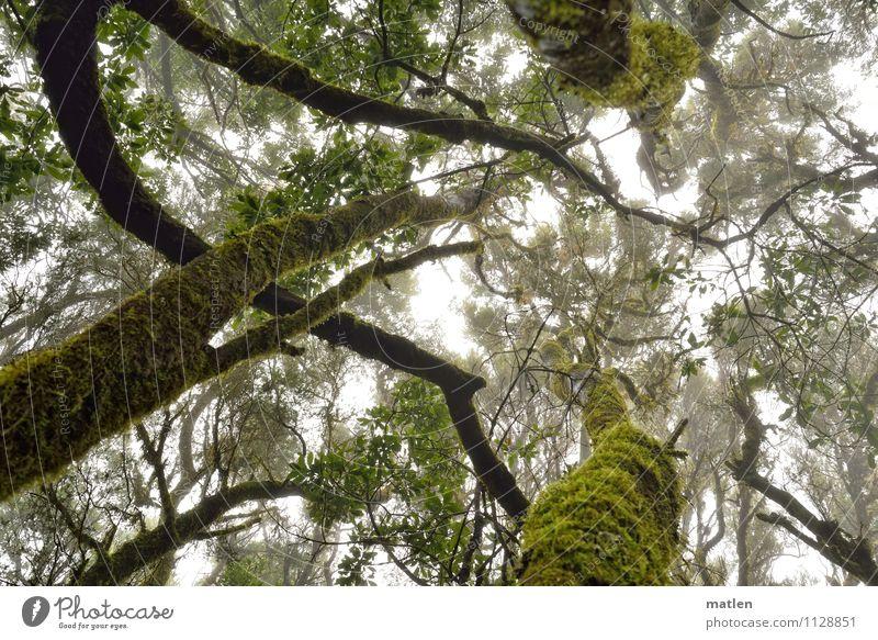 ohne Moos nix los Pflanze Wassertropfen Himmel Wolken Wetter schlechtes Wetter Nebel Baum Blatt Wald Menschenleer natürlich braun grün weiß eigenwillig