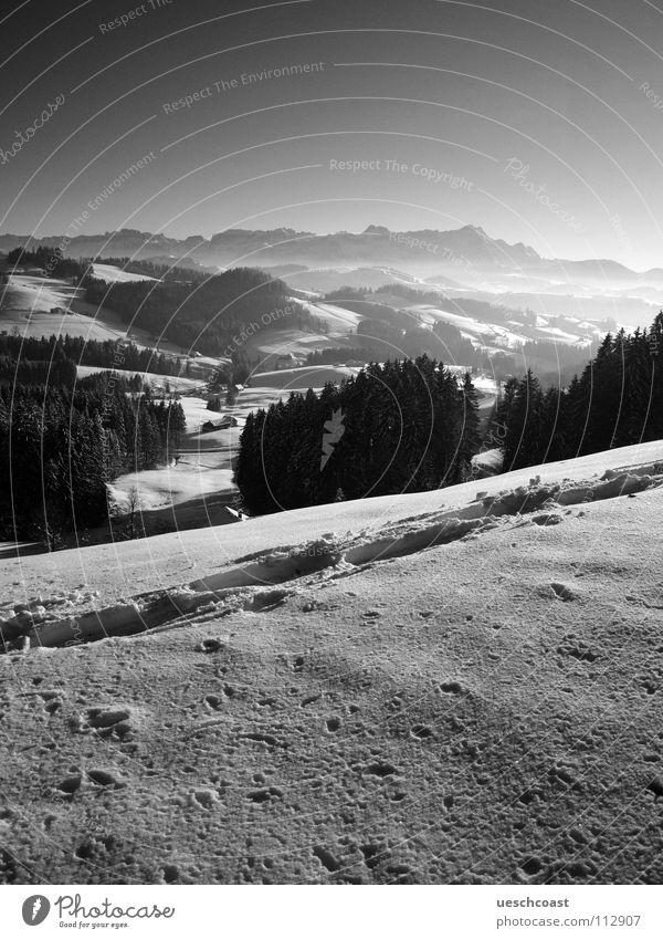 der st.galler WInter Winter Wald Berg Säntis Spuren kalt weiß schwarz Schweiz Schwarzweißfoto Panorama (Aussicht) Berge u. Gebirge egge panoramma Nebel Kontrast