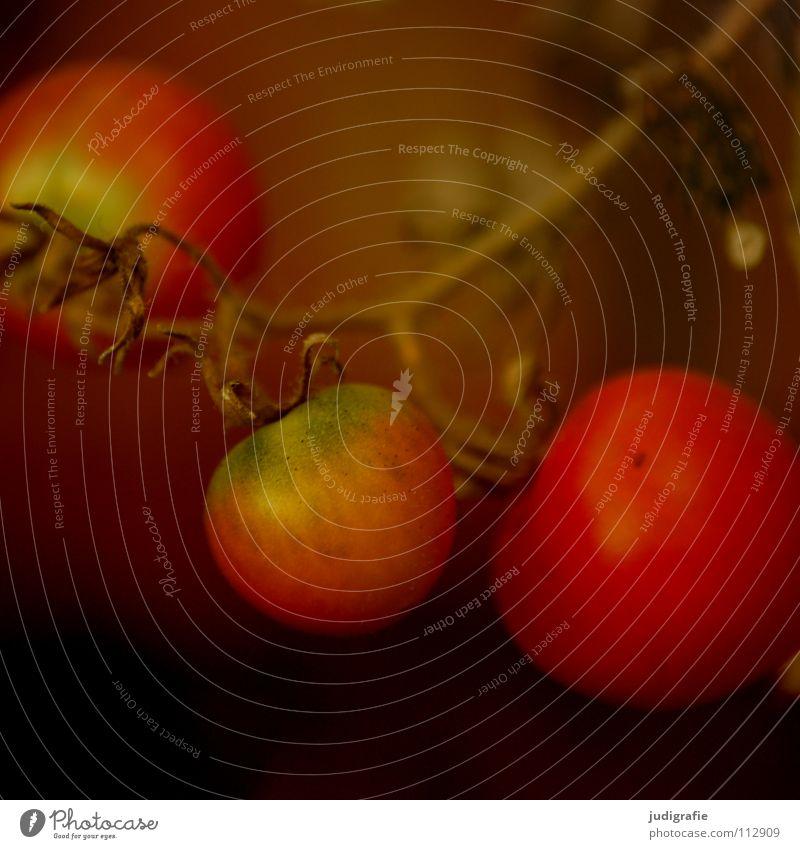 Überbleibsel Sträucher Gewächshaus unreif trocken Sommer Herbst Lebensmittel Ernährung rot grün Gärtner Gemüsegarten Wachstum Pflanze Farbe