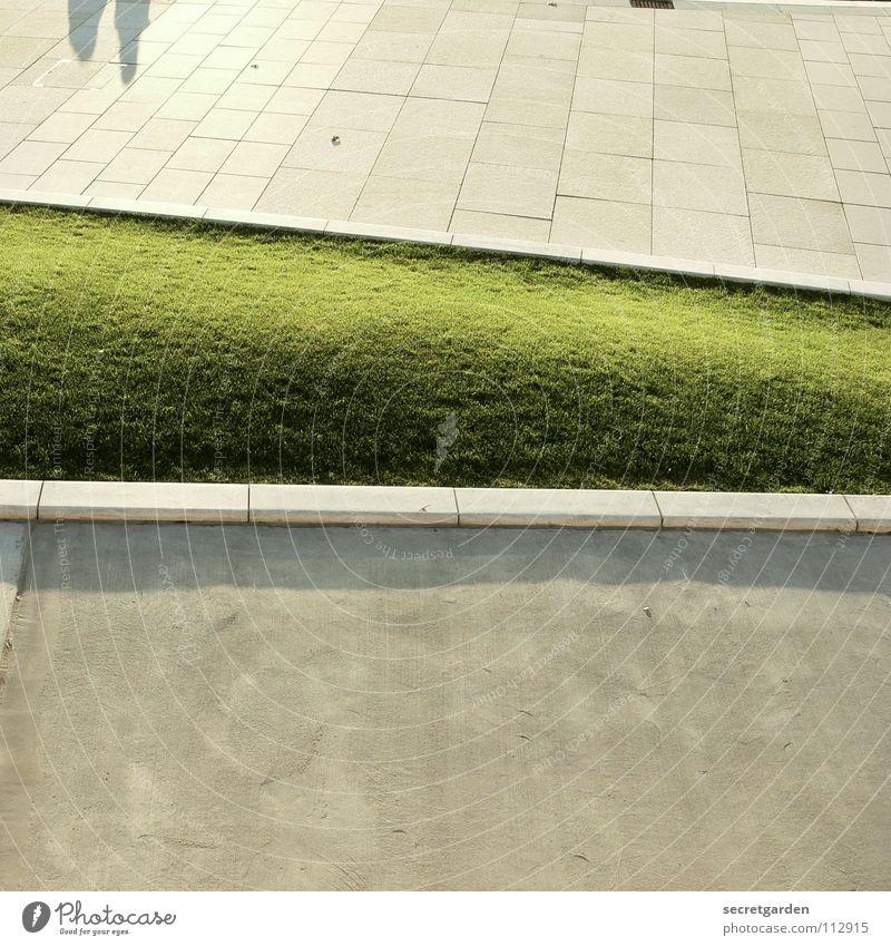 hasenohren weiß grün Sommer ruhig Straße Herbst Architektur Wege & Pfade Garten Park Raum Zusammensein Platz verrückt rund Rasen