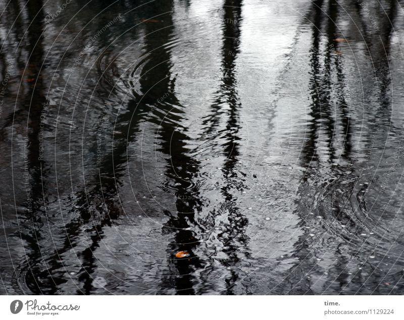 Hamburger Vorfrühling Umwelt Natur Landschaft Wasser Wassertropfen schlechtes Wetter Baum Blatt Pfütze kalt nass Traurigkeit Sorge Trauer Müdigkeit Unlust