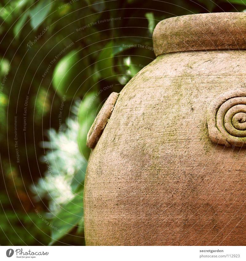 überbleibsel vom sommer alt grün schön Sommer Baum Tod Garten Kunst Park Design Raum Dekoration & Verzierung Sträucher leer Vergänglichkeit Kultur