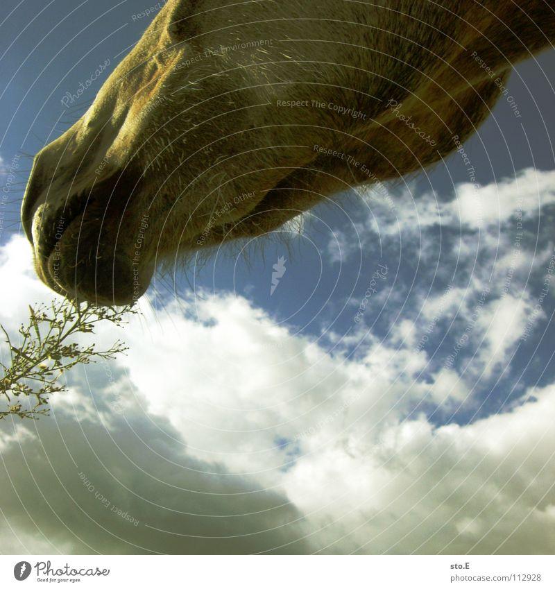 biokost Himmel Natur grün schön Sonne Wolken Tier Wiese Ernährung Spielen Freiheit Glück braun Kraft Wind Beleuchtung