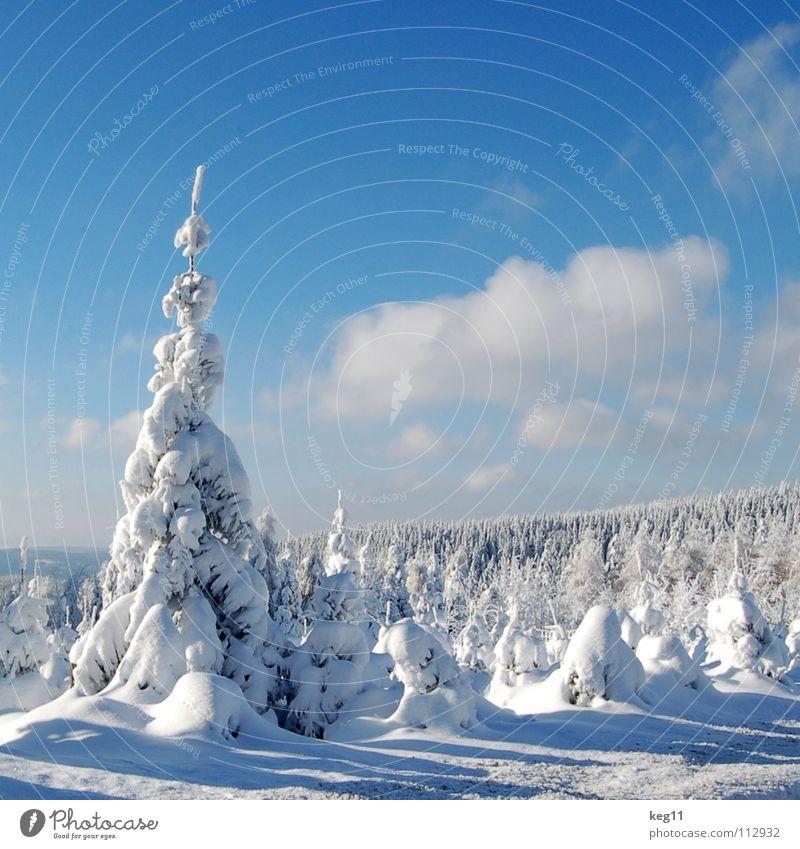 Märchenhaft II Himmel schön weiß Baum Freude Winter Wald kalt Graffiti Schnee Spielen Stimmung Beginn Ziel Hütte Ende