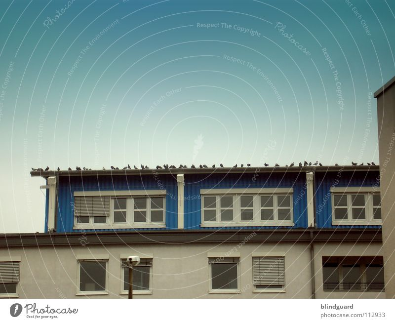 Montag-Morgen-Meeting Himmel blau Haus Fenster Vogel fliegen Fassade Industrie Ecke mehrere Kommunizieren Sitzung Reihe viele Taube