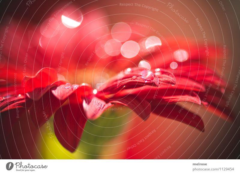 Reflexionen VIII Natur schön grün weiß Blume rot Blatt ruhig Gefühle Frühling Blüte Stil braun Stimmung glänzend leuchten