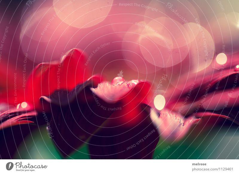 Reflexionen VI schön grün Erholung Blume rot Gefühle Frühling Blüte Stil glänzend träumen leuchten Design elegant gold Perspektive