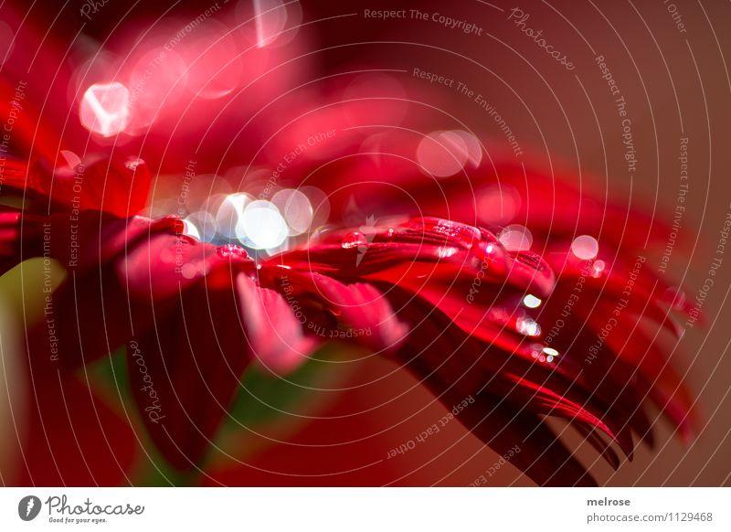 Reflexionen X Natur grün schön weiß Erholung Blume rot ruhig Blüte Gefühle Frühling Stil braun glänzend Design leuchten