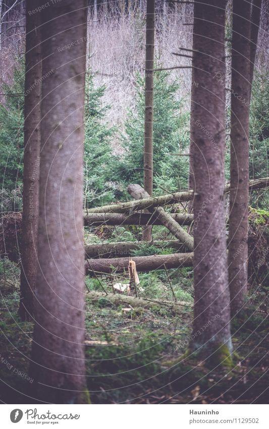 Sturmschaden Umwelt Natur Landschaft Pflanze Tier Frühling Klima Klimawandel Wetter schlechtes Wetter Unwetter Wind Baum Gras Sträucher Moos Grünpflanze