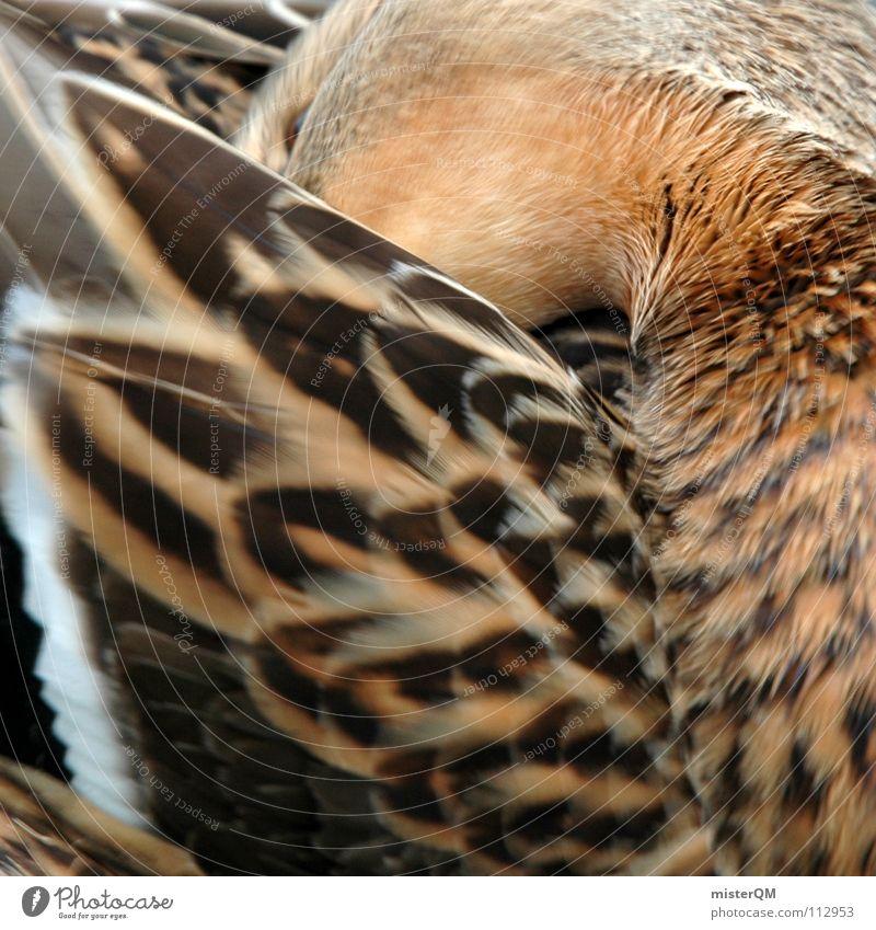 coat care Wasser weiß Tier ruhig Erholung Auge dunkel Leben Wärme Gefühle springen hell Vogel braun Schwimmen & Baden Wellen