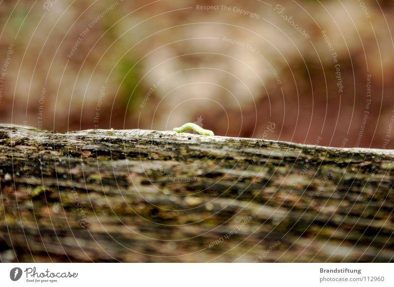 Raupe umgeben von Unschärfe Tier Insekt Baum braun dreckig Herbst klein süß Baumstamm Holz matschig Natur alt