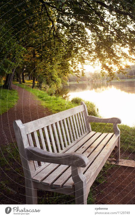 Ruheort harmonisch Erholung ruhig Umwelt Natur Landschaft Sonnenaufgang Sonnenuntergang Sommer Schönes Wetter Park Seeufer einzigartig Hoffnung Idylle Pause Tod