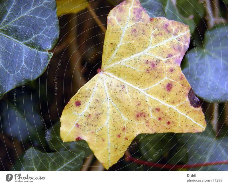 blattfarben Baum Pflanze Blatt Herbst