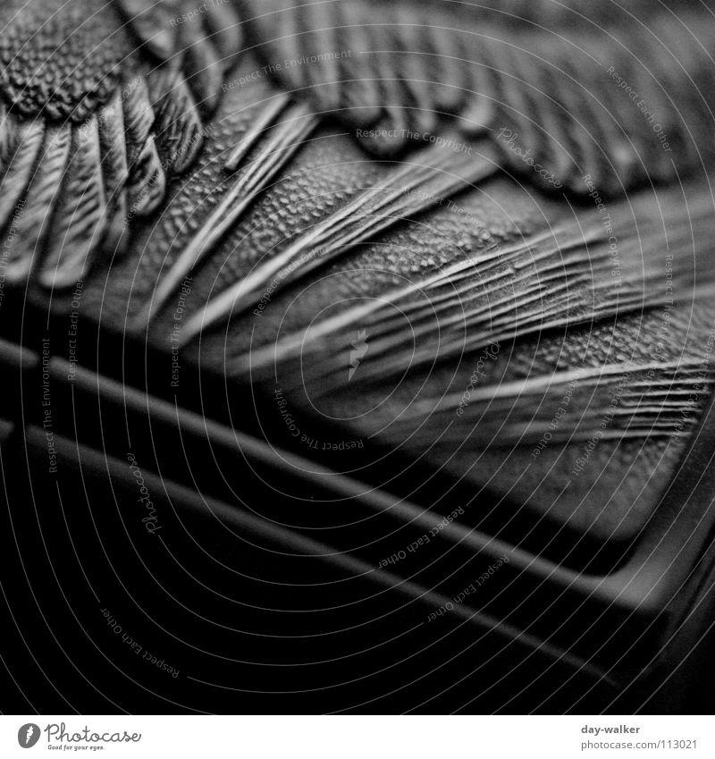 Kontrastspiele dunkel schwarz weiß Muster Belichtung Adler Oberfläche Silhouette Nahaufnahme Schwarzweißfoto Metall Reaktionen u. Effekte gravur embossed Feder