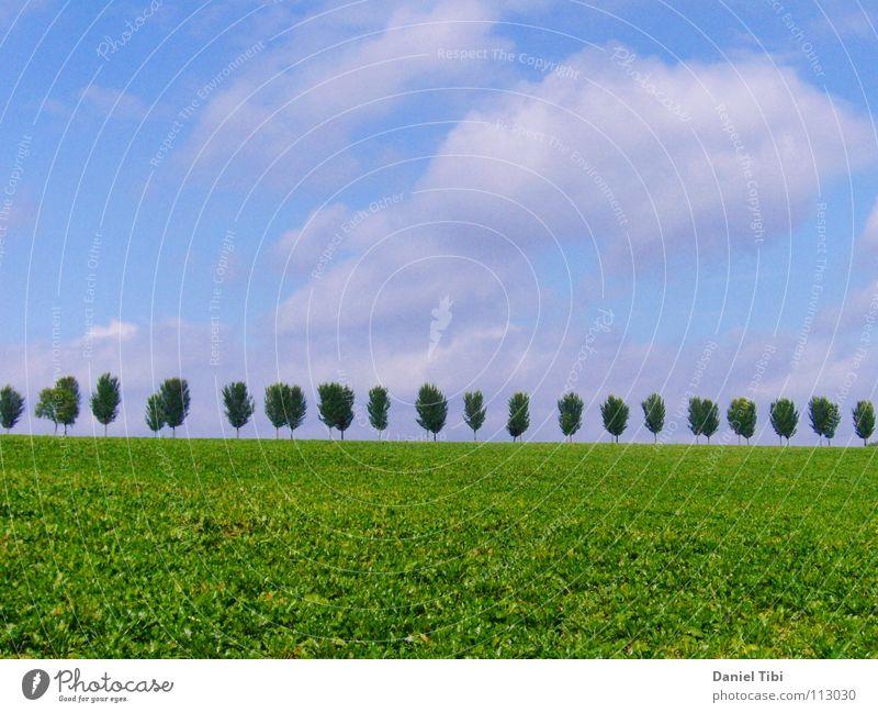 Bäume in Reih' und Glied Himmel Baum grün blau Sommer Ferne Gras Freiheit Ordnung