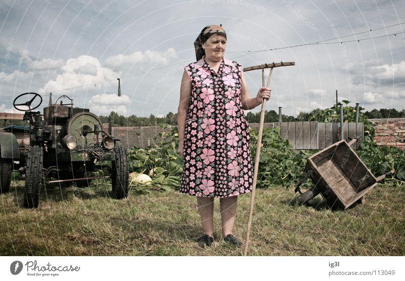 königin des gartens Mensch Frau Himmel blau alt grün schön rot Tier Wiese Tod Gras Glück Hintergrundbild Arbeit & Erwerbstätigkeit Feld